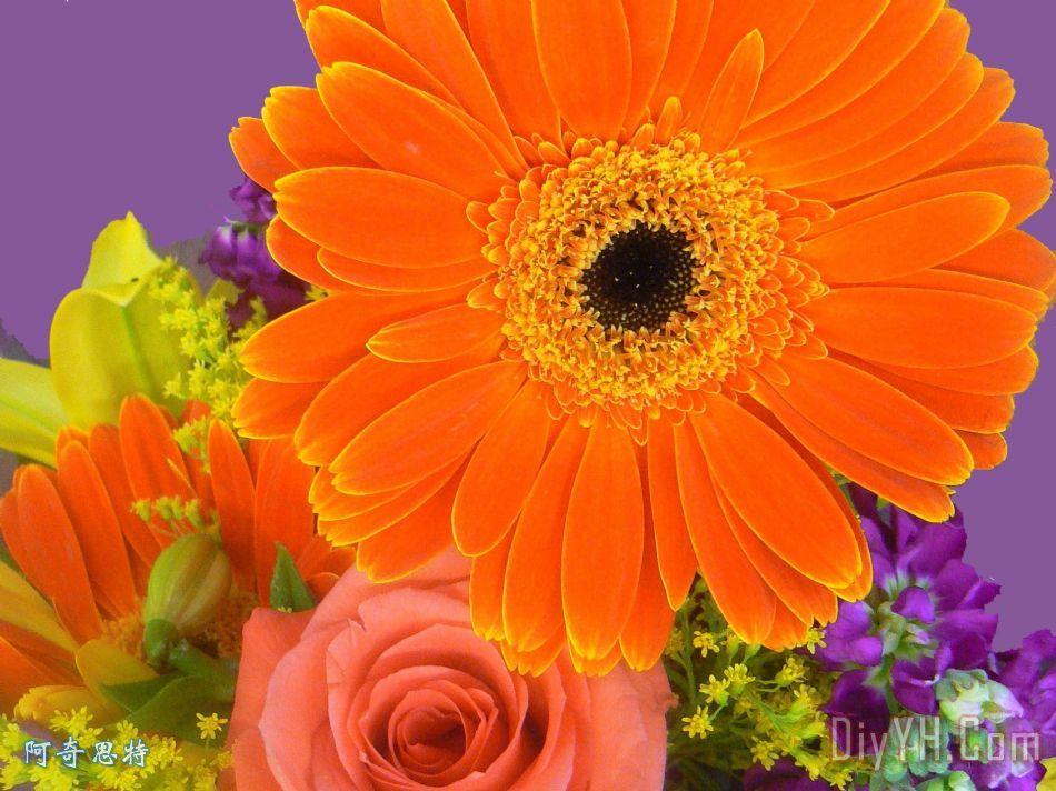秋天的主体性装饰画_风景_花卉_黄色_橙色的_摄影_的