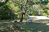 浮法树装饰画