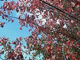 枫叶和蓝天装饰画