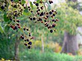 林地浆果装饰画