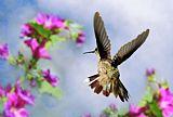 天使之翼装饰画