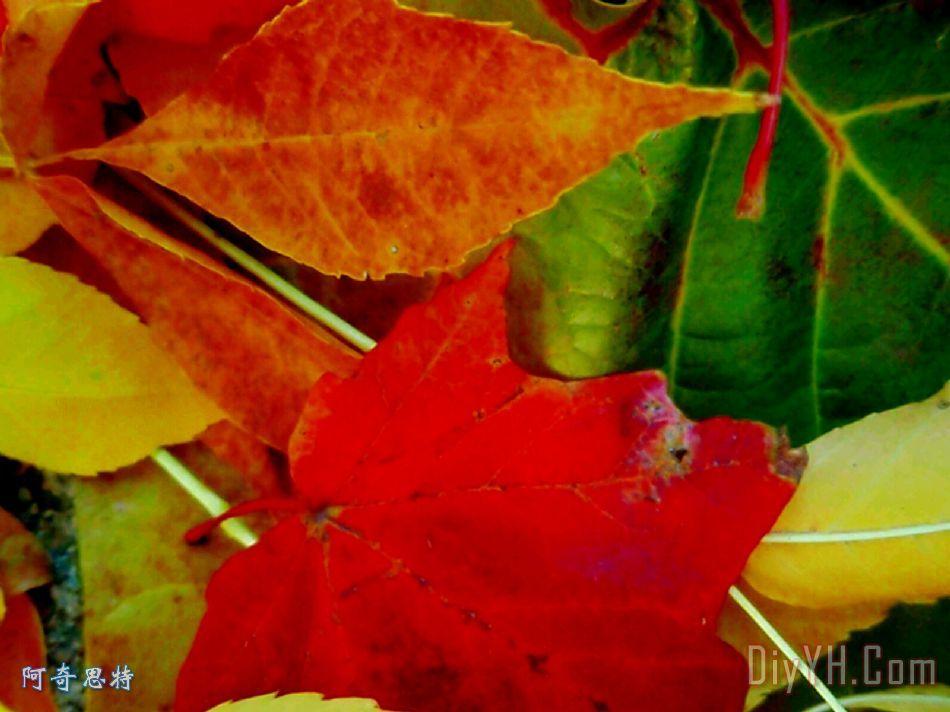 五颜六色的树叶装饰画_风景_秋天_叶子_颜色_五颜六色