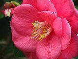 粉红色的吻装饰画
