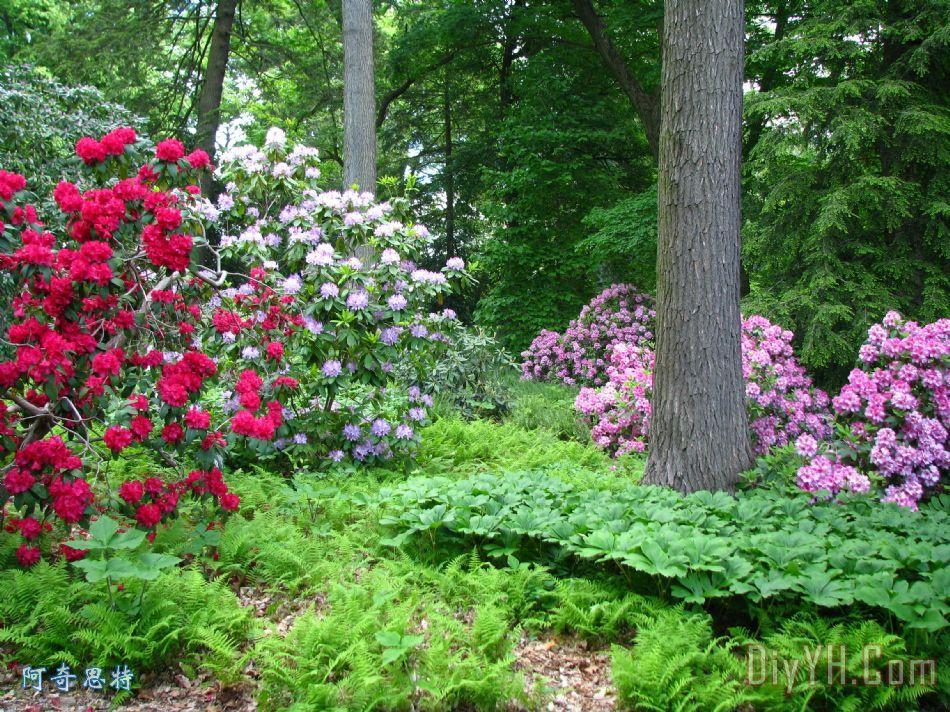 春天的森林装饰画_风景