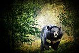 亚洲黑熊装饰画