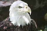 鹰人像装饰画