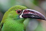 绿色的羽毛装饰画