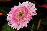 粉红色褶边装饰画