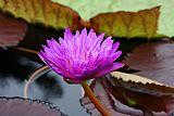 紫色宝石装饰画