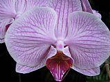 紫色唇膏装饰画