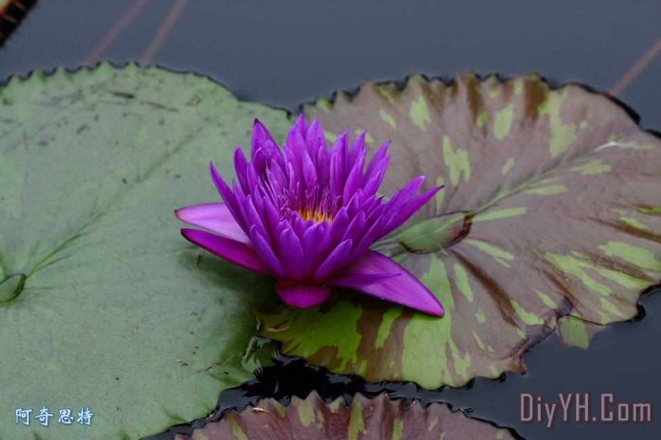 紫色激情 - 紫色激情装饰画
