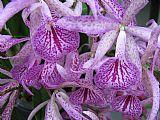 紫香装饰画