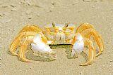 海螃蟹装饰画