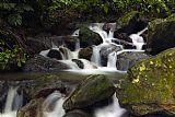 加勒比海国家森林公园装饰画集5834