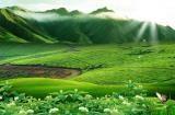 城市风光照片 - 茶山实景 茶园风光照片